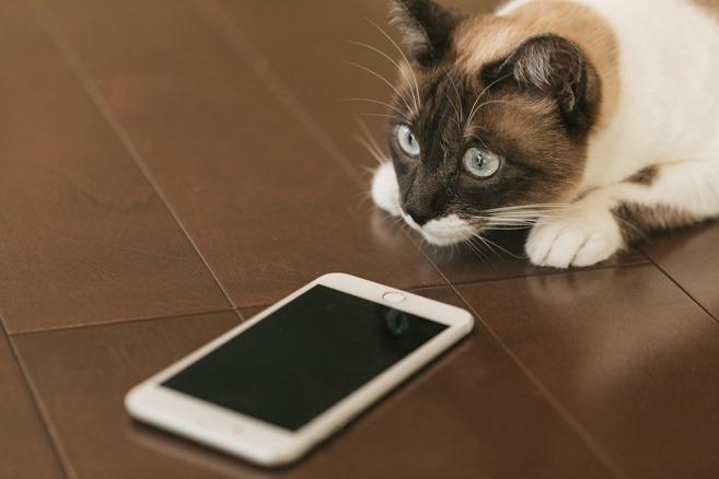 cat9V9A9021_TP_V[1]